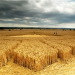 The Art of Crop Circle (Pictures Galleries)