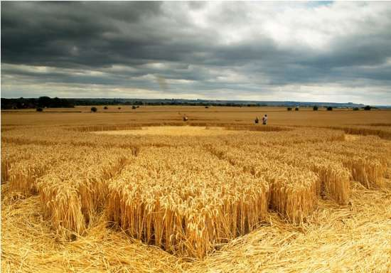 the sharp end of a crop circle