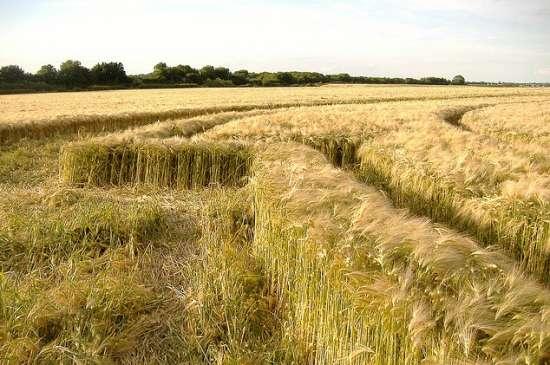 Crop circle near to Barbury Castle, June 08.
