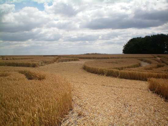 Inside crop circle - East Field. Alton Barnes, Wiltshire