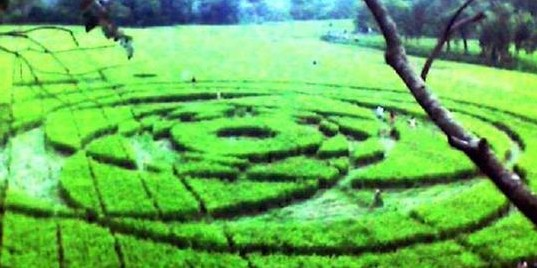 crop circle sleman yogya indonesia 2011