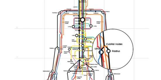 The Human Underskin Subway Map Infographic