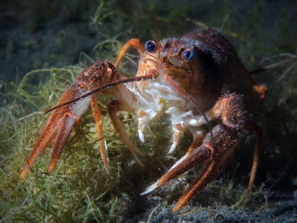 Beautiful Underwater Animals Photography