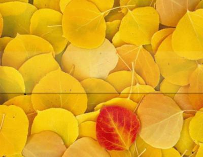 Aspen Leaves Microsoft PowerPoint Templates