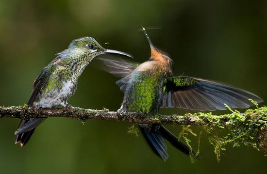 Best Hummingbird Photos