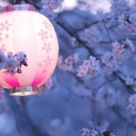 Beautiful Cherry Blossoms (Sakura) Photos by jyoujo