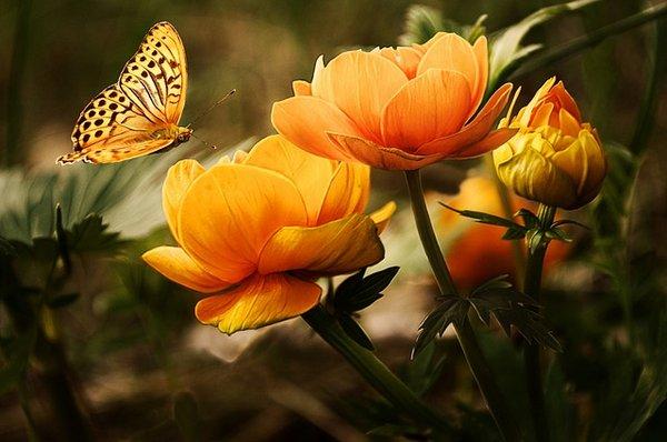 Beautiful Orange Free Public Domain Image