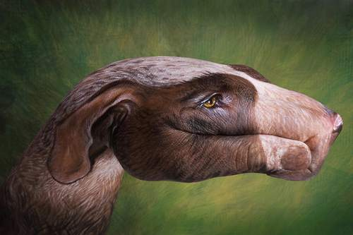 12-animal-hand-painting