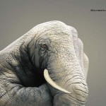 50 Stunning Animal Hand Paintings by Guido Daniele