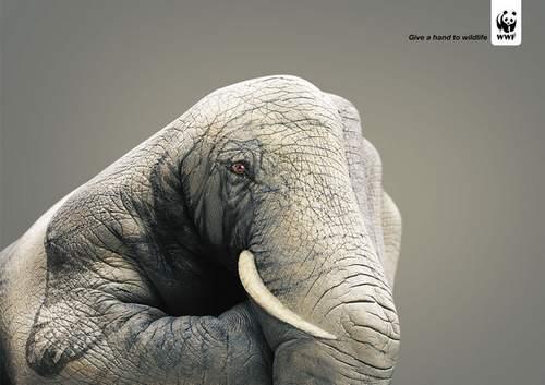 36-animal-hand-painting
