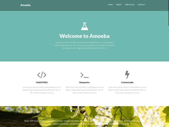amoeba bootstrap template