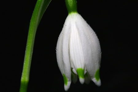macro snowflake flower photography