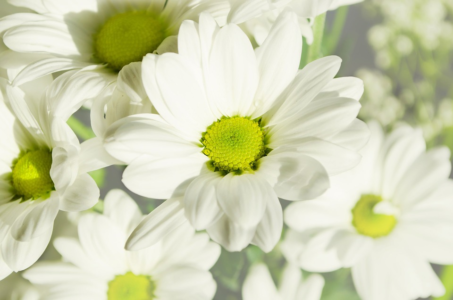 white green flower photos