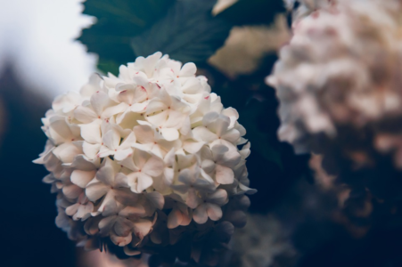 flowers free photos