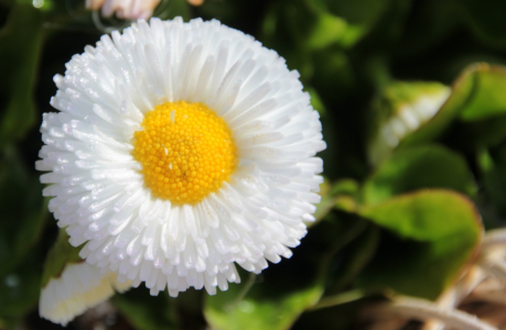 geese flower