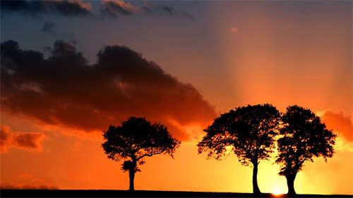 savnna_sunset