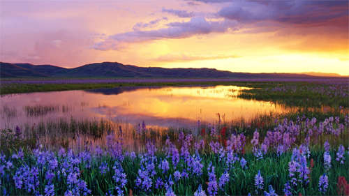 camas_prairie_background