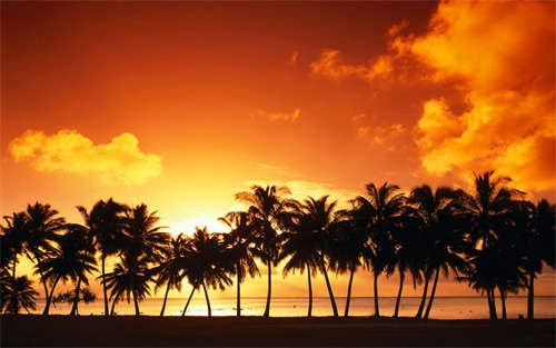 palm_tree_sunset_background