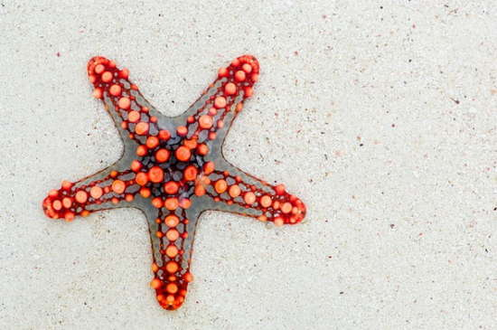 starfish_white_texture