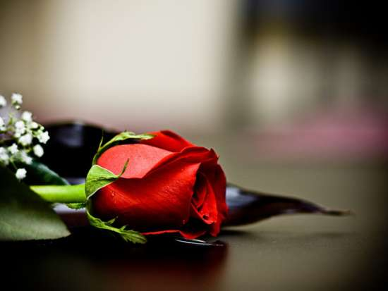 red_rose_love_wallpapers