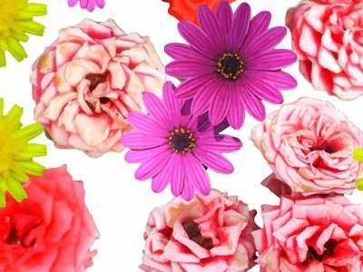 floral_background_vector_art