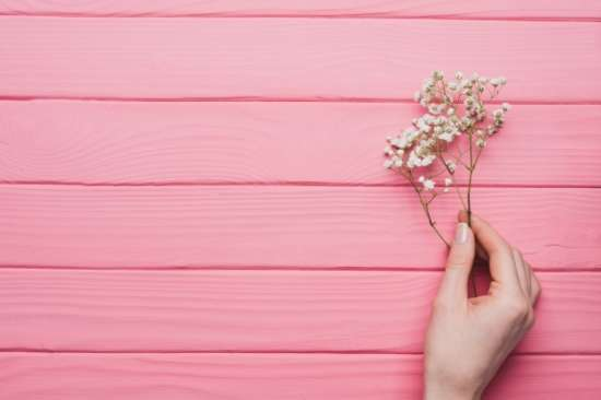 pink_wooden_background_with_hand_holding_a_twig